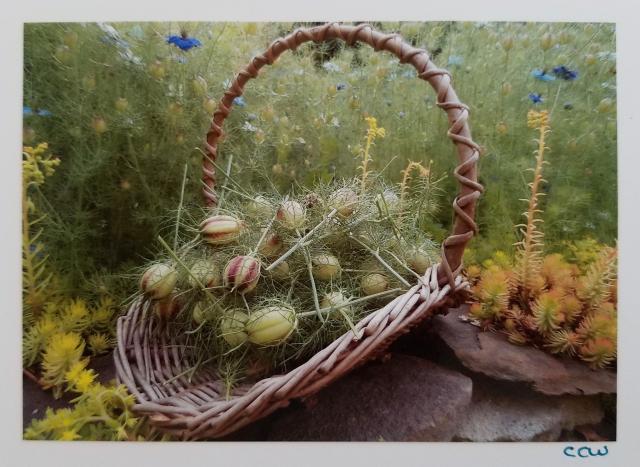 Basket of Pods